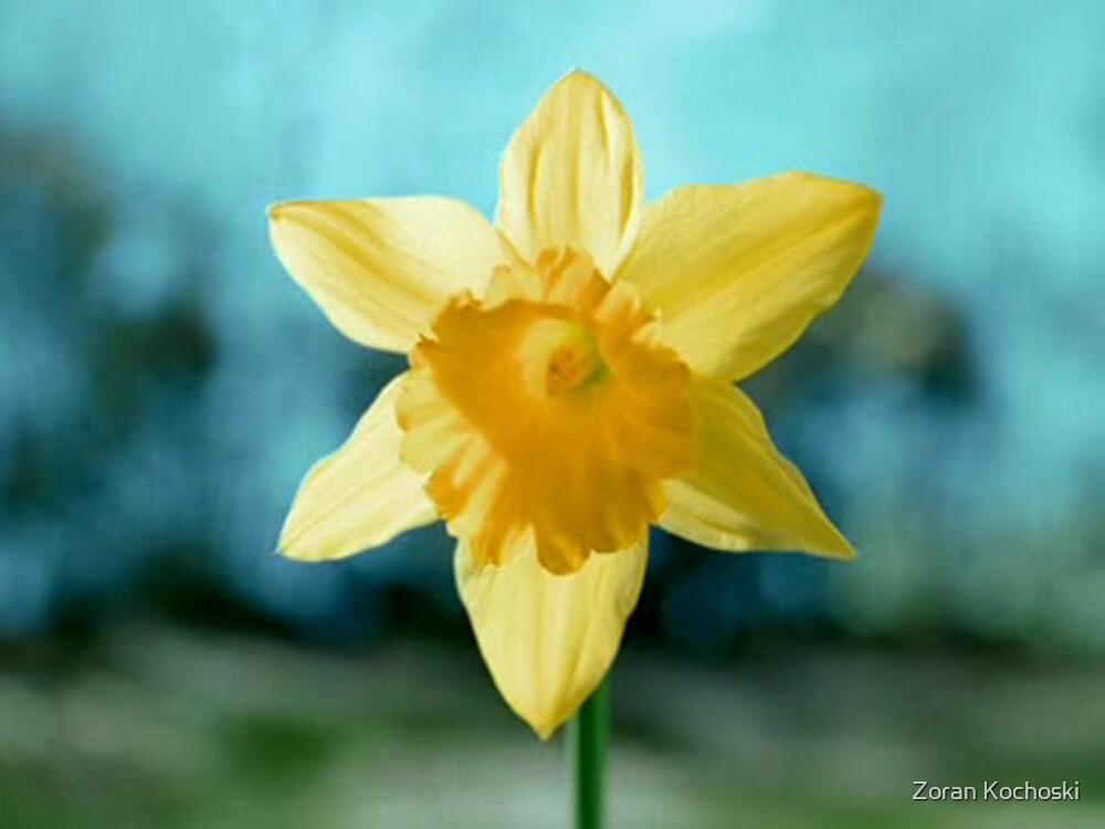 The Flower by Zoran Kochoski