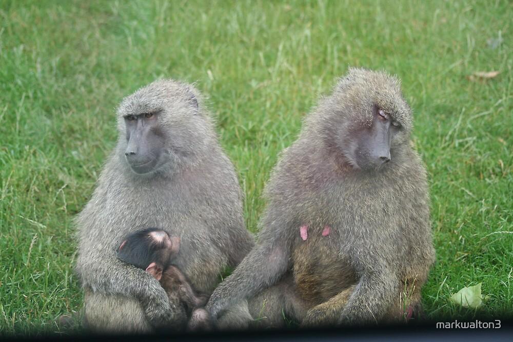monkey family by markwalton3