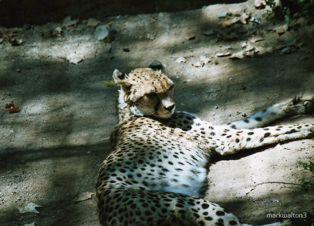 leopard by markwalton3