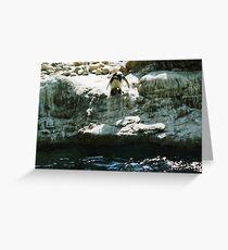 penguin diving Greeting Card