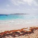 Caribbean Dreaming by Jonicool