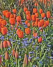 Tulips in Vancouver by Yukondick