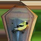 Chickadee by spig