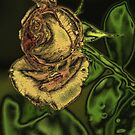 The Rose by spig