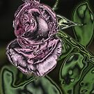 The Rose in Pink by spig
