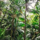 Tropical Forest by Jonicool