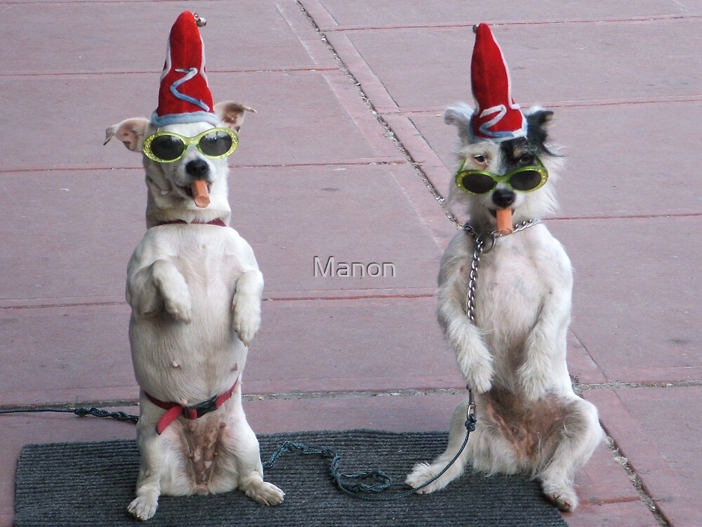 The clown dogs by Manon