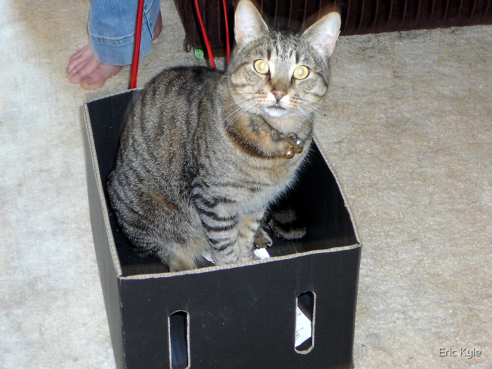 CAT IN A BOX by Eric Kyle