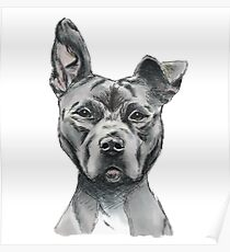 Stalky Pit Bull Dog Drawing Poster