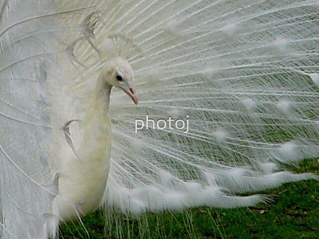 photoj  animal-bird by photoj