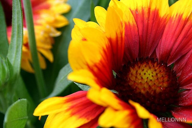 bloom of fire by MELLONNN