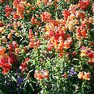 snap dragon flowers by oilersfan11