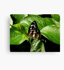 Butterfly    ^ Canvas Print