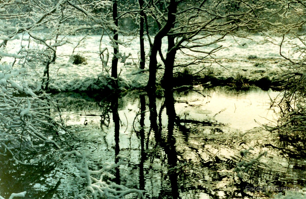 Reflections in a Wintry Pool by Gordon Hewstone