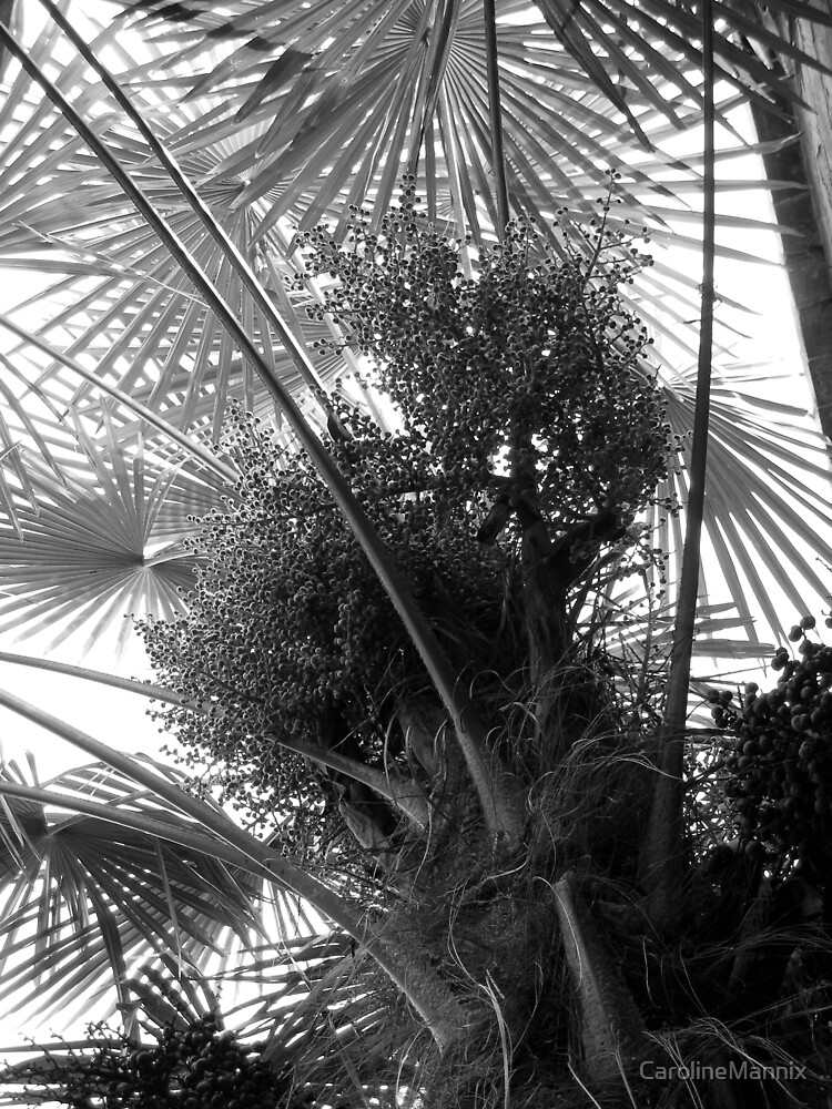 Palm in Perspective by CarolineMannix