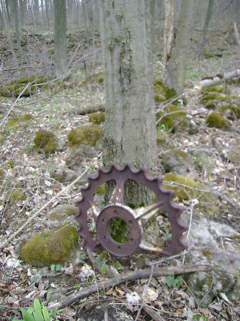 Cog against tree by Robert Lake