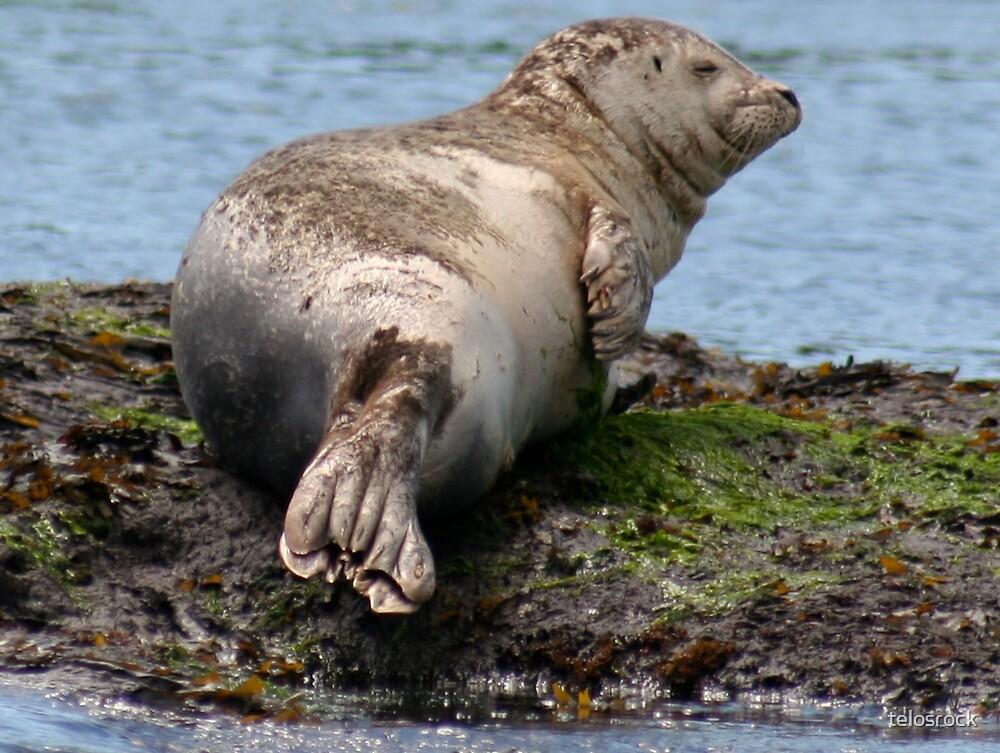 Sleepy seal by telosrock
