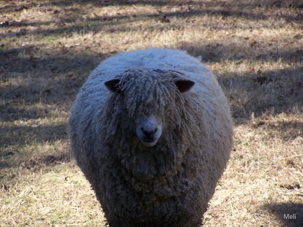 Something Seems Sheep-ish by Meli