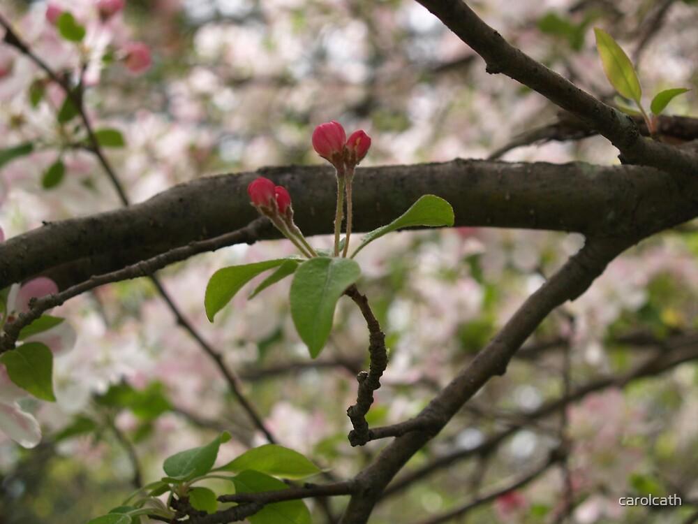 Springtime Budding Hope  by carolcath
