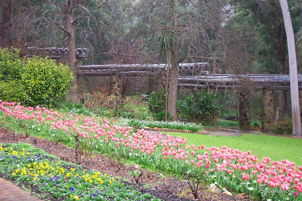 Tulips at Araluen Botanic Park by Susan Moss
