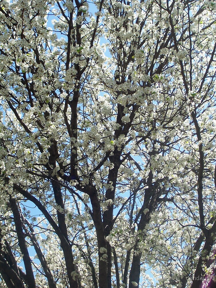 Tree - Spring by candays