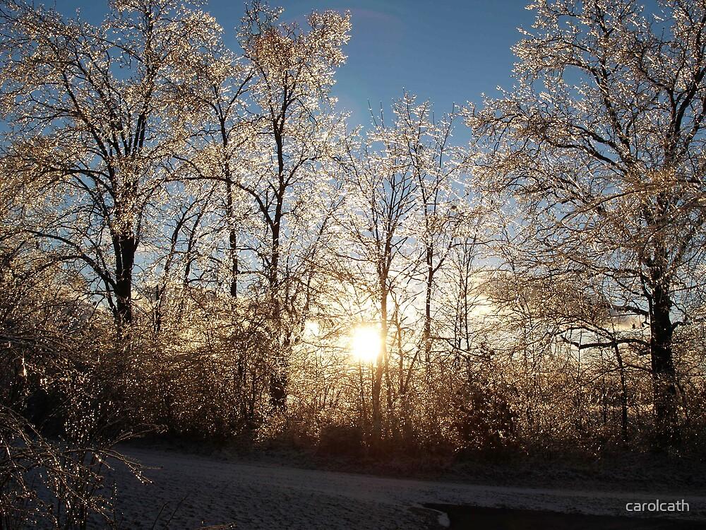 Winter Michigan Sun, trees, ice, nature,light,shining.tree by carolcath