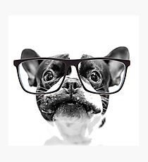 Reputable French Bulldog with Glasses Photographic Print