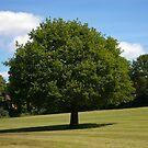 Tree by Steve plowman