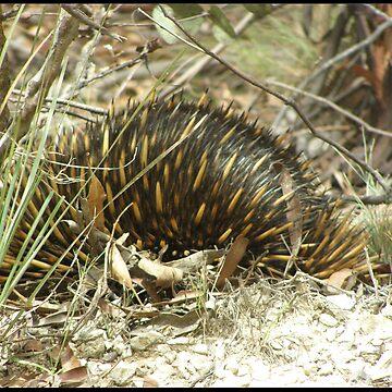 Spiky Friend by tazzae