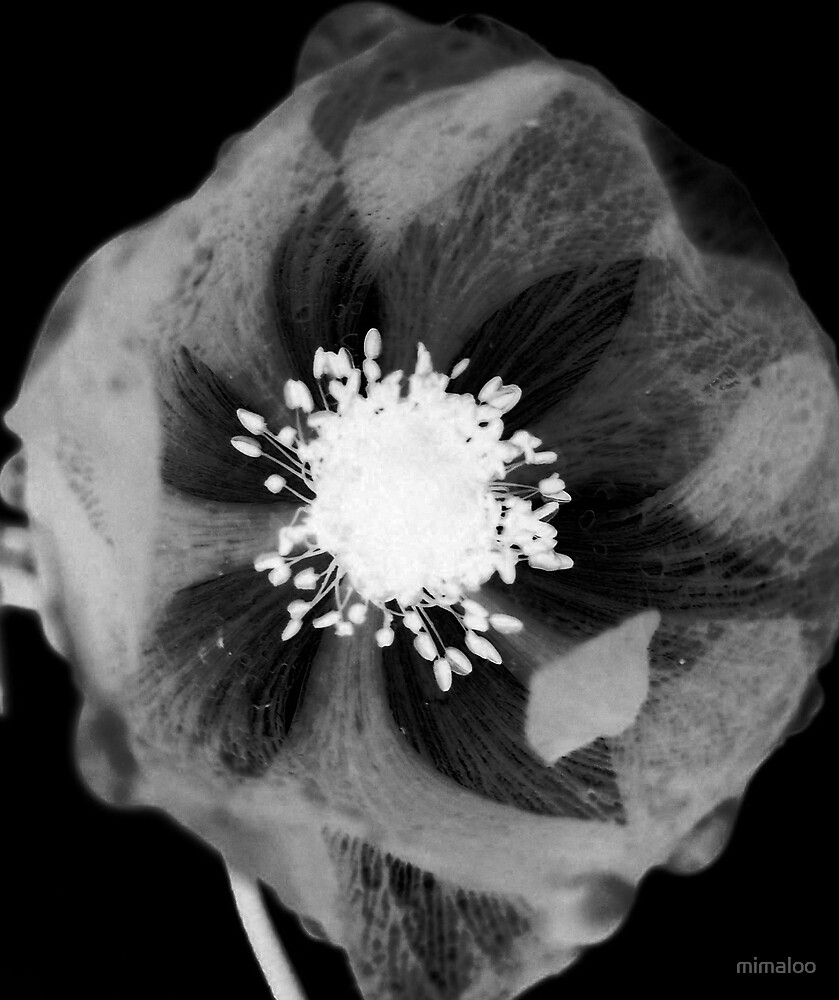 inverted flower by mimaloo