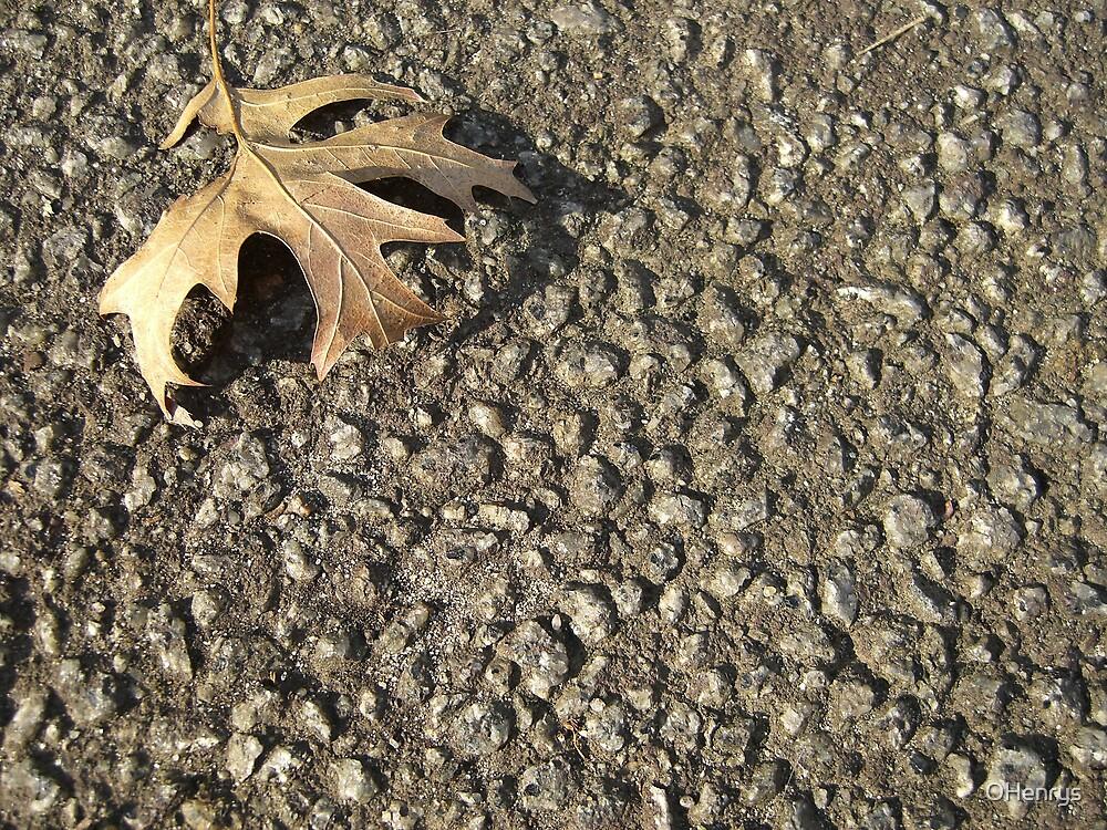 leaf in on Road TLC by OHenrys