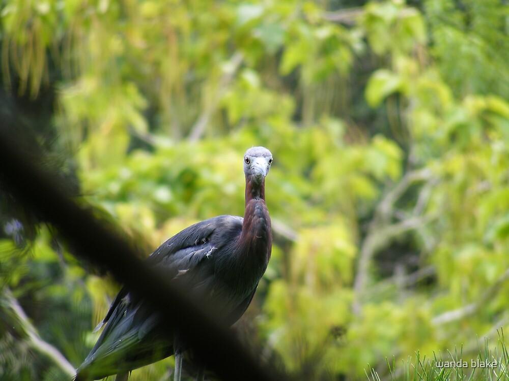 bird in the gardens by wanda blake
