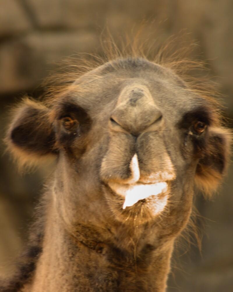 Camel by ericbeau