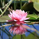Pink Reflection by Wzard