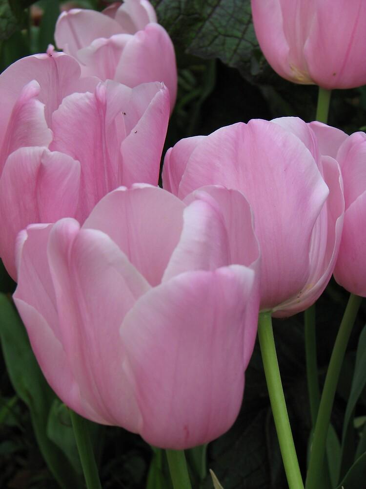 flowers by edisa