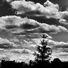Stormy Skies by babygvc