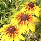 3 yellow sunflowers all in a row by babygvc