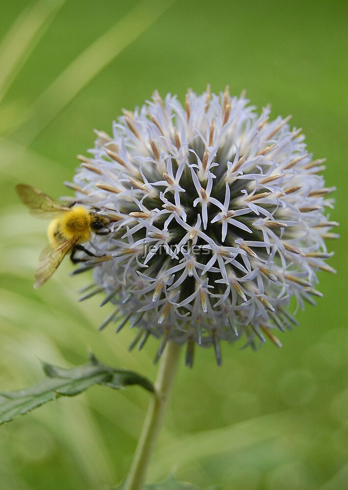 Sea Thistle with Bee by jenndes