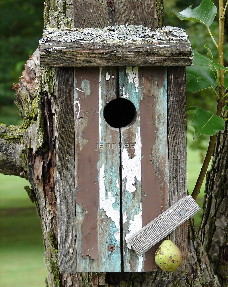 Bird House in Crab Apple Tree by jenndes