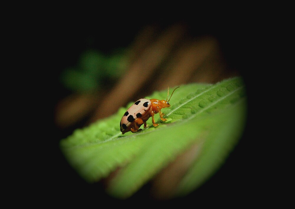 ladybird by kathie