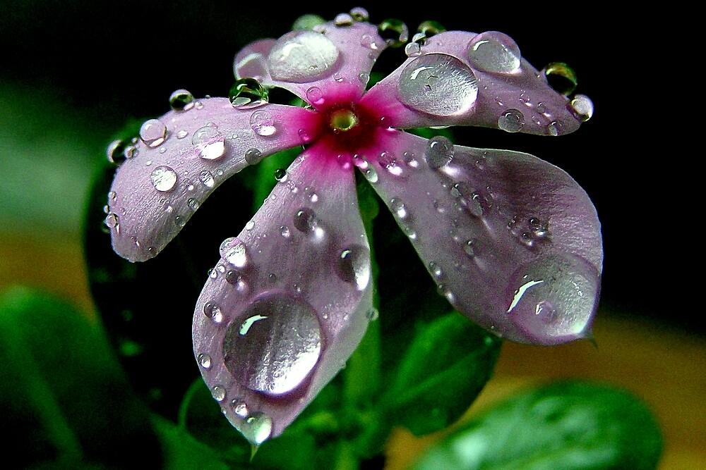rain drops by arup