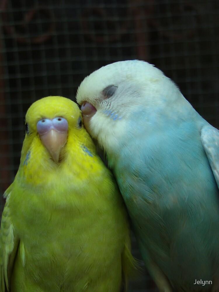 love birds by Jelynn