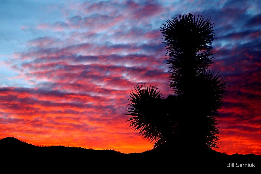 Yucca Sunset by Bill Serniuk