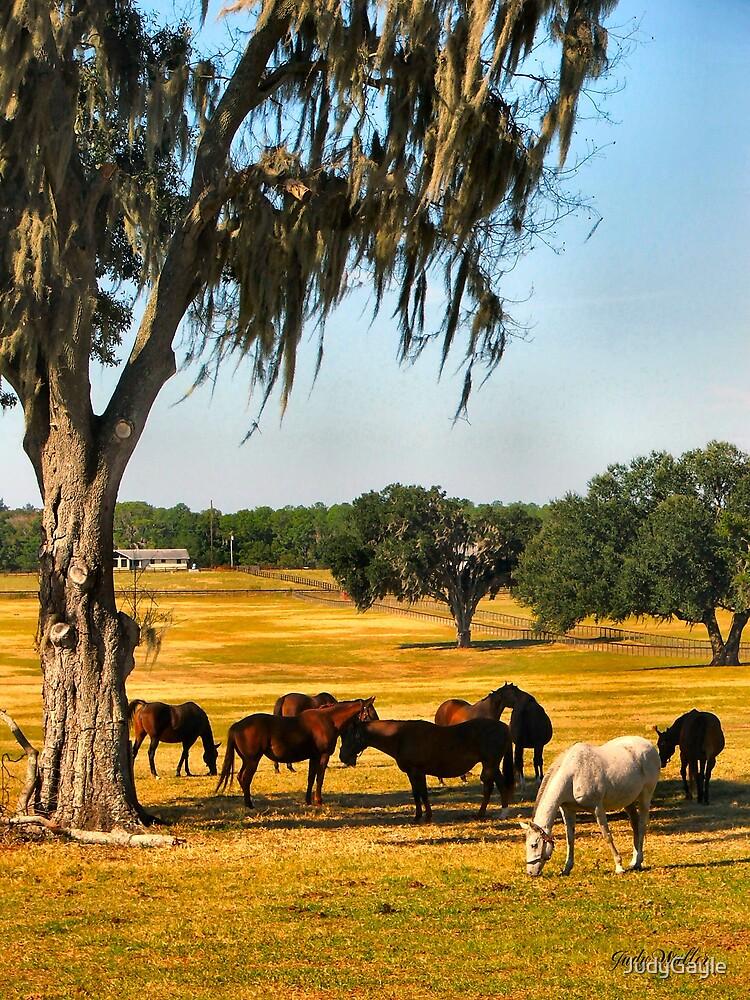Ocala Horse Farm by Judy Gayle Waller