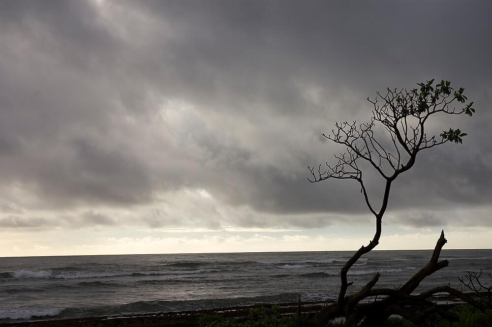 Kauai Tree by wyllys