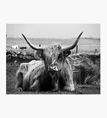Highland Coo on the Island of Tiree Photographic Print