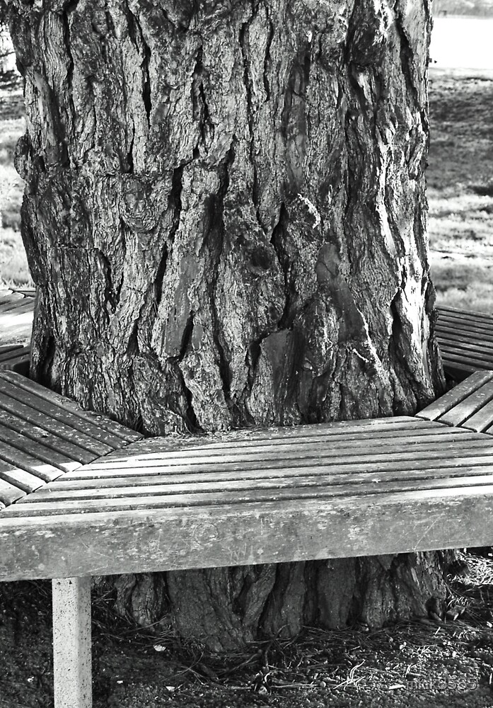 Pine tree and seat by mick8585