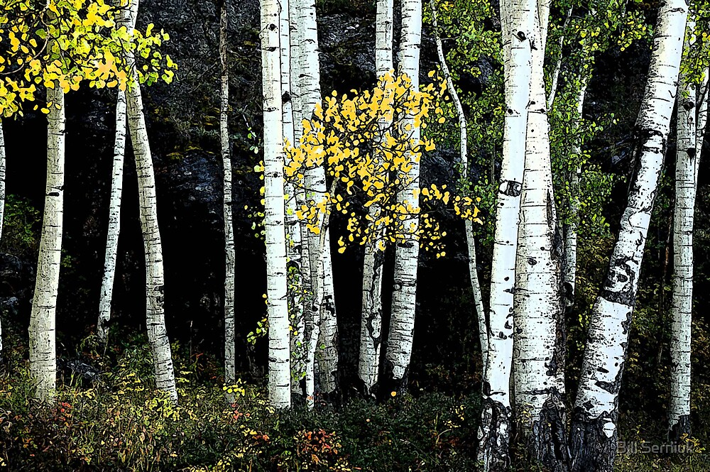 Aspen Forest by Bill Serniuk