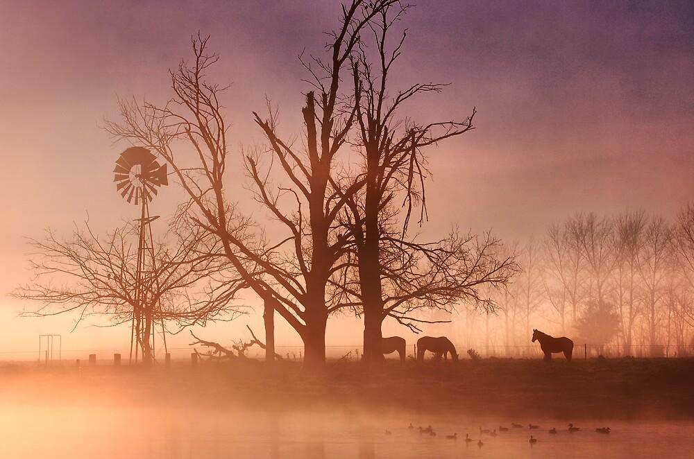 Winter fog at Richmond by Alex Lau