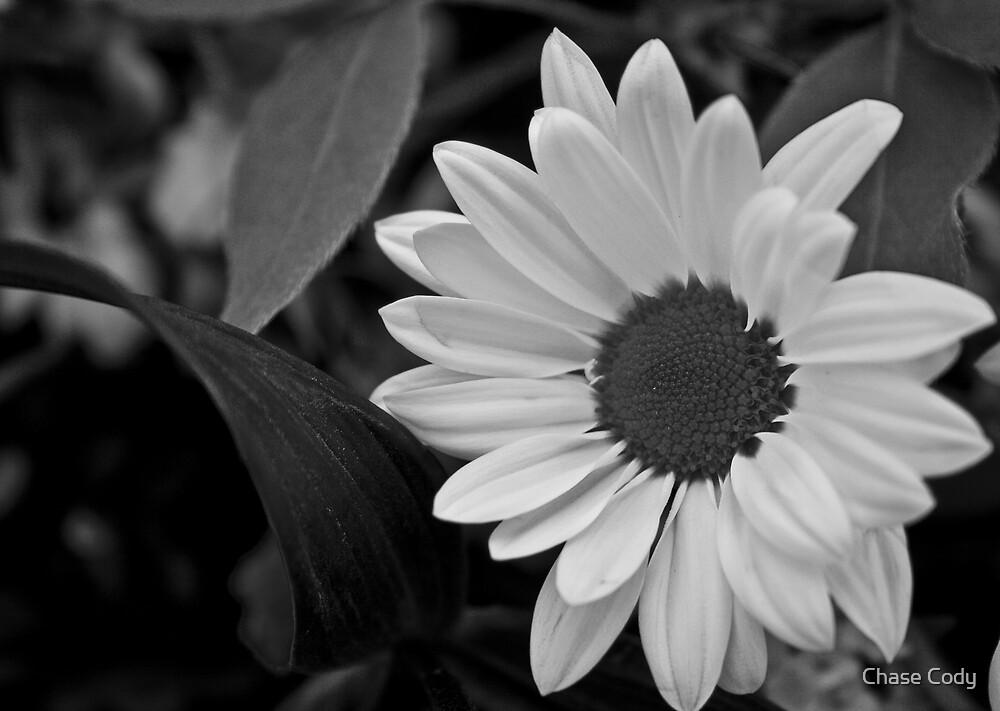 B/w Flower by Chase Cody